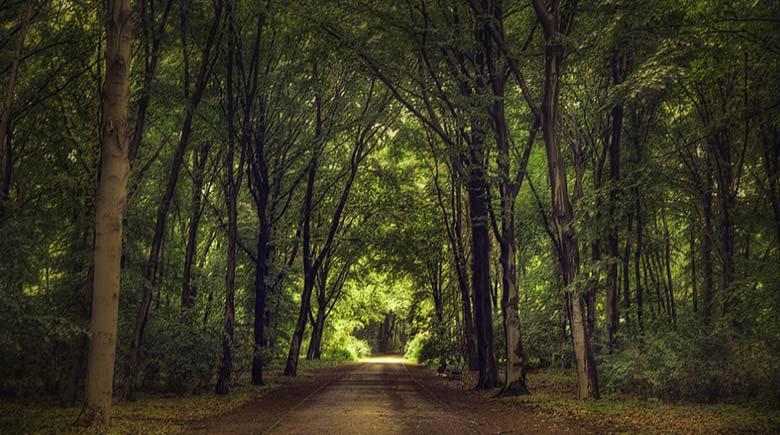 Венский лес рисунок
